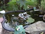 Jardinage à domicile Villeneuve-sur-Lot