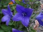 Jardinage à domicile Plouvorn