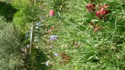Jardinage à domicile Nîmes