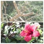 Jardinage à domicile Besançon