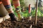 Jardinage à domicile Chartres-de-Bretagne