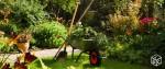 Jardinage à domicile Dourdan