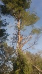 Jardinage à domicile Toulon