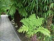 Jardinage à domicile Cuxac-Cabardès