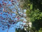 Jardinage à domicile Vannes