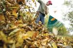 Jardinage à domicile Mont-de-Marsan