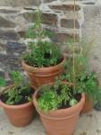 Jardinage à domicile Brest